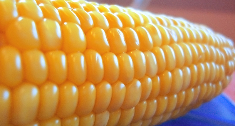 What are GMOs and how do they impact us?